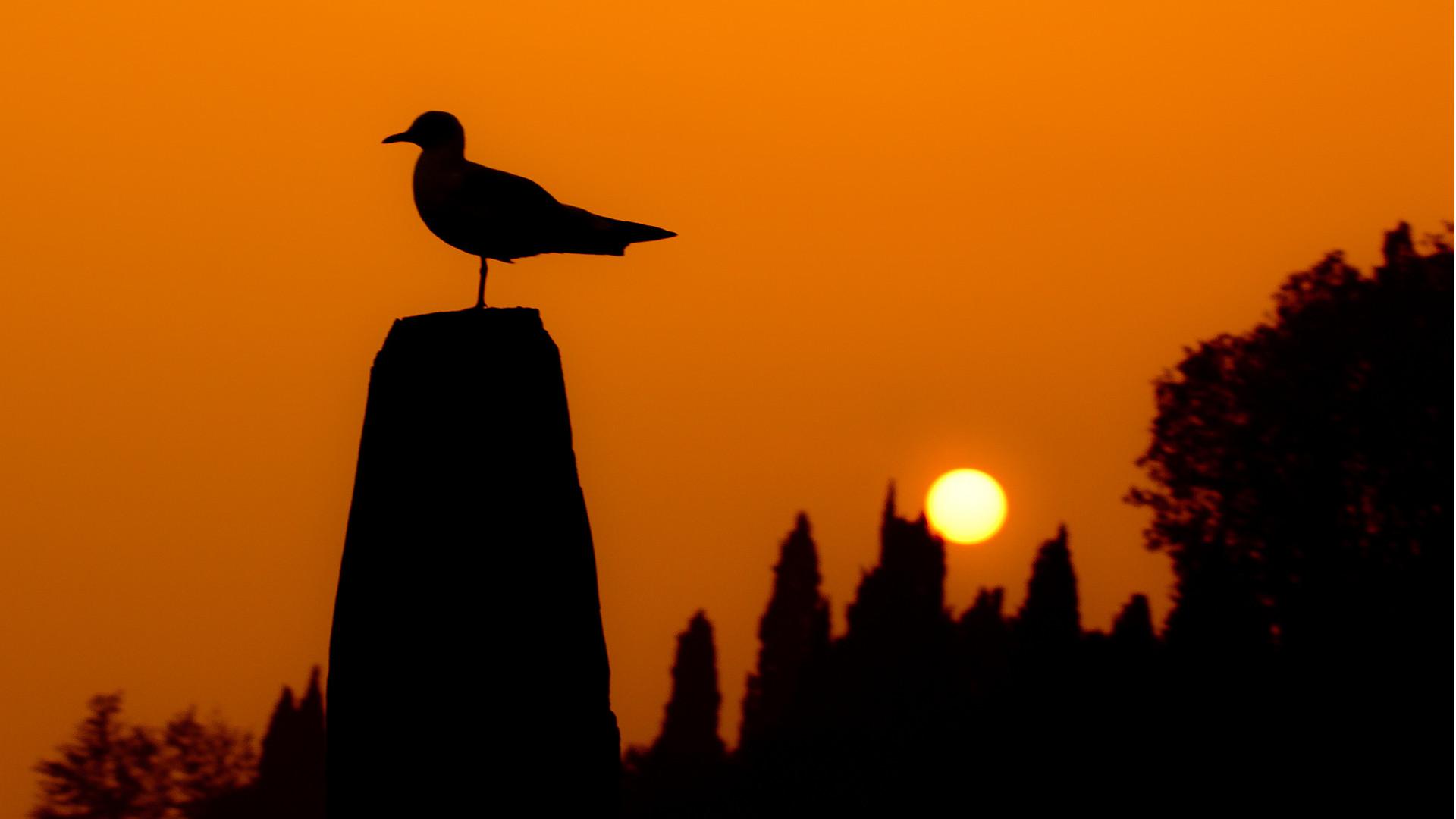 bird sun