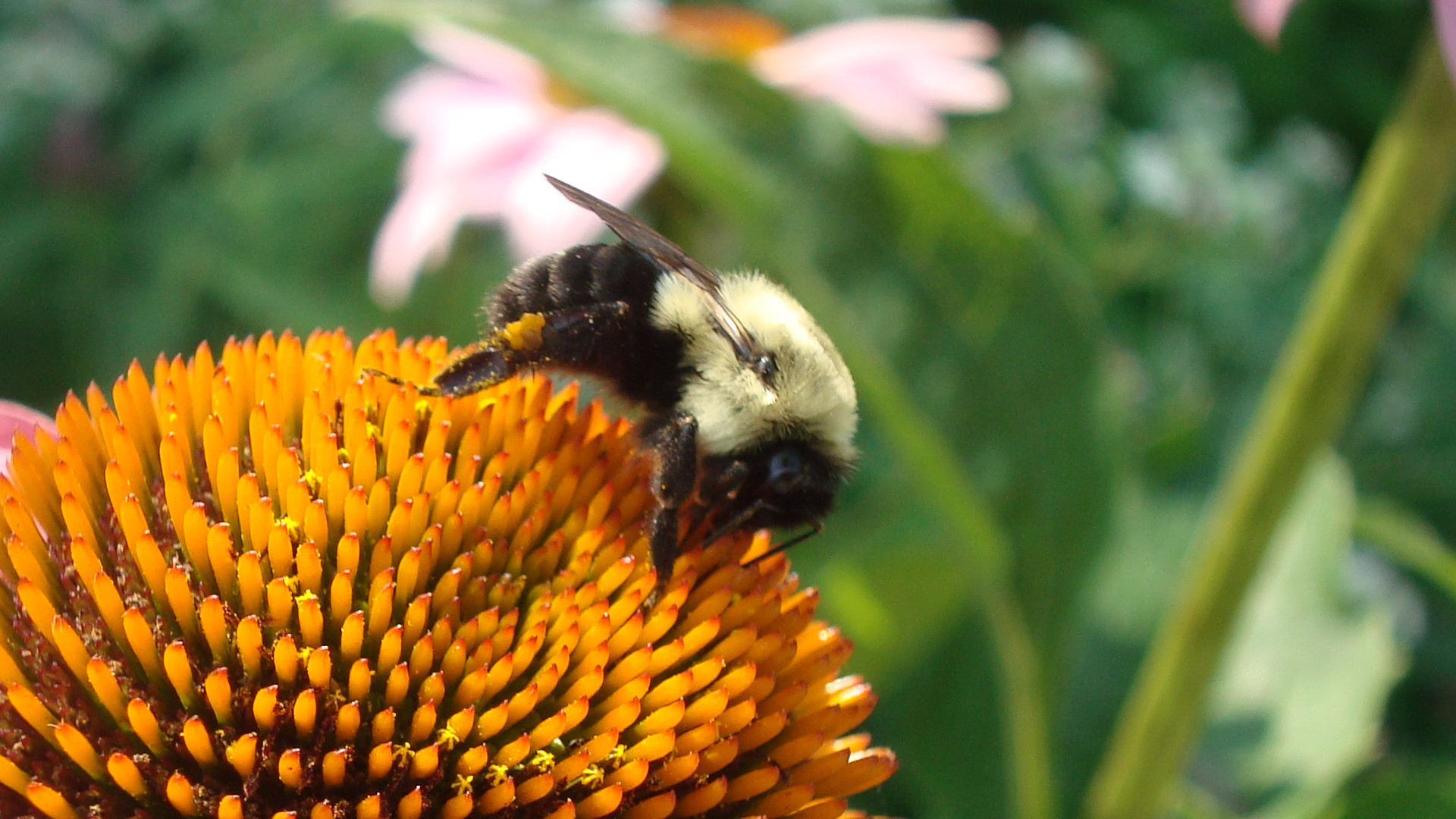 Why Does It Take So Long to Phase Out Bee-killing Neonic