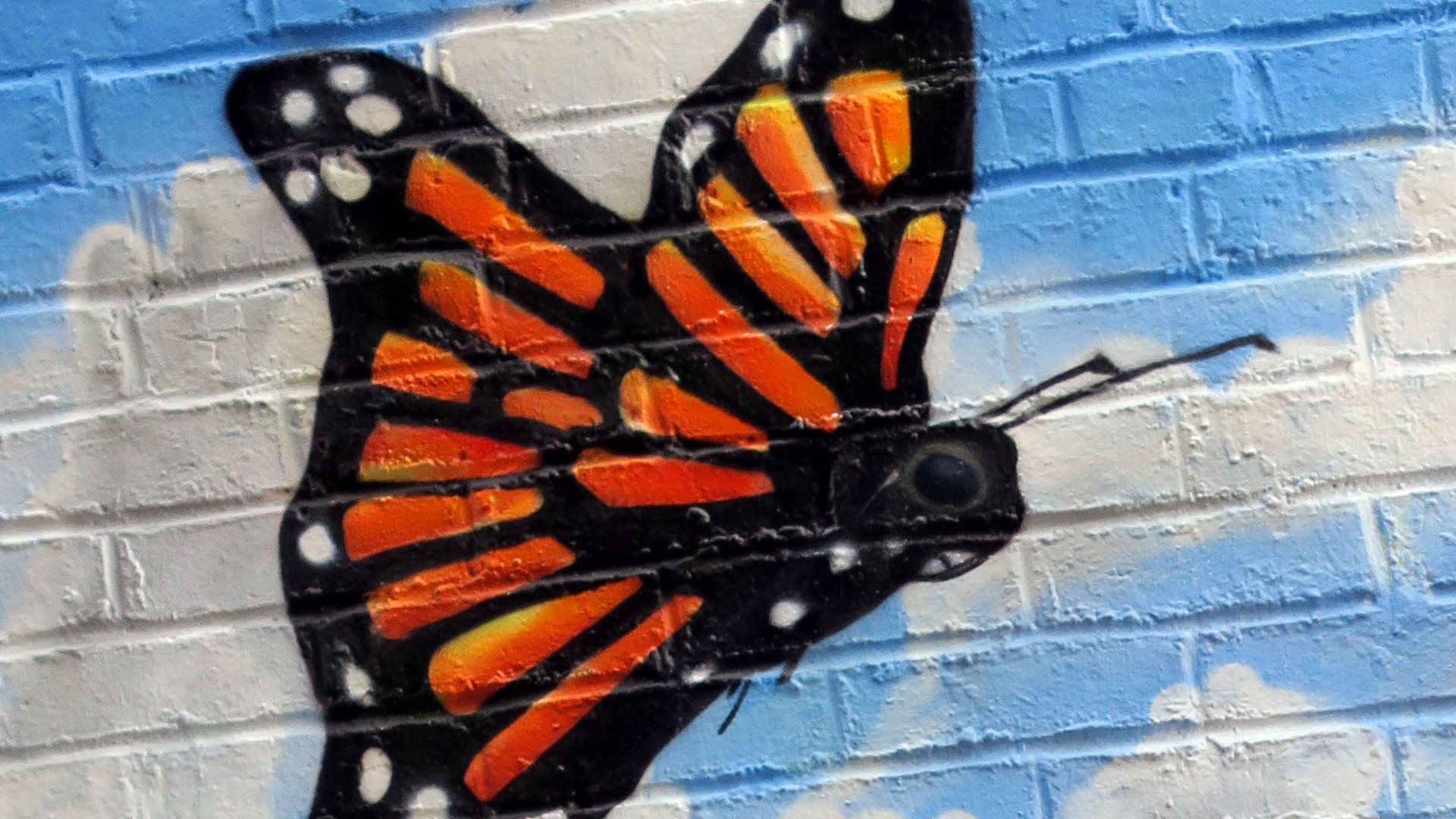 monarch butterflies wall