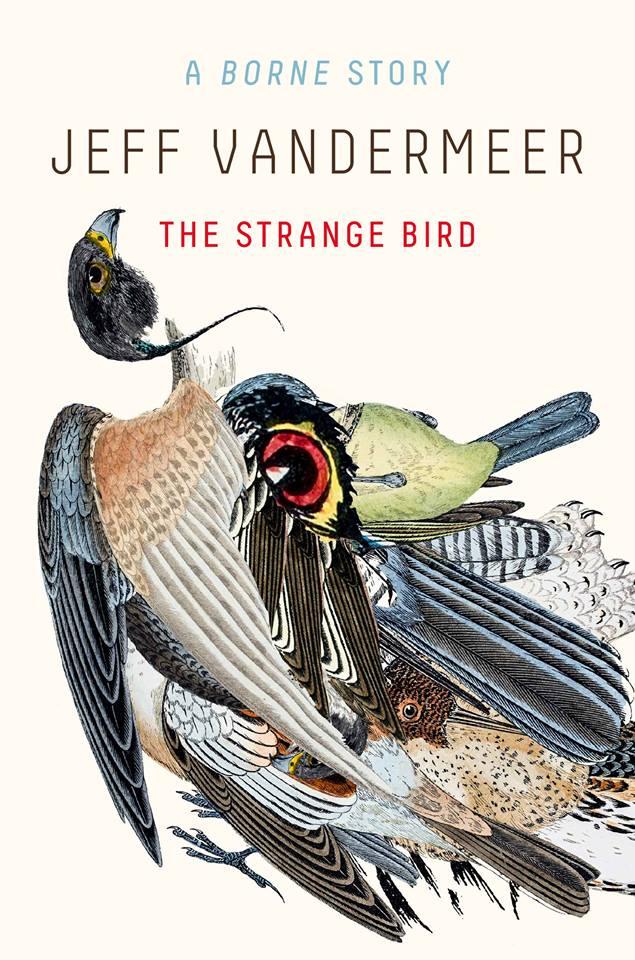 strange bird vandermeer
