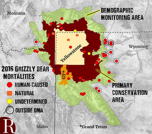 grizzly mortality 2016