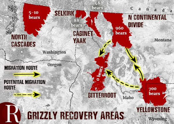 grizzly recovery areas