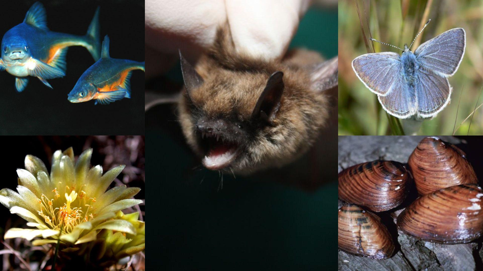 beyond megafauna bats mussels butterfly plants fish
