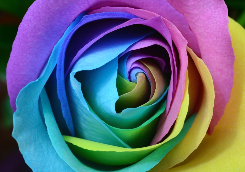 flower dyes