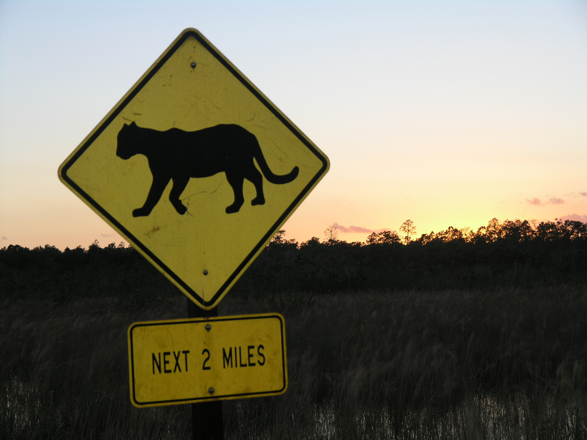 Florida panther driving sign
