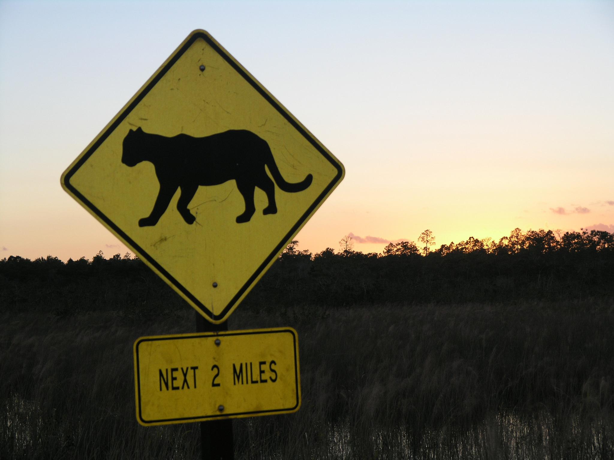 Florida panther driving sign
