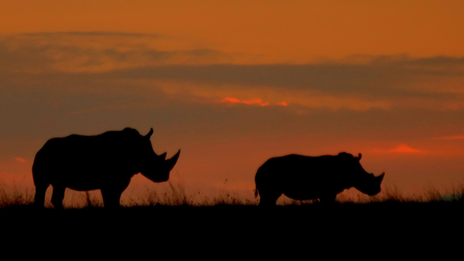 rhino sun