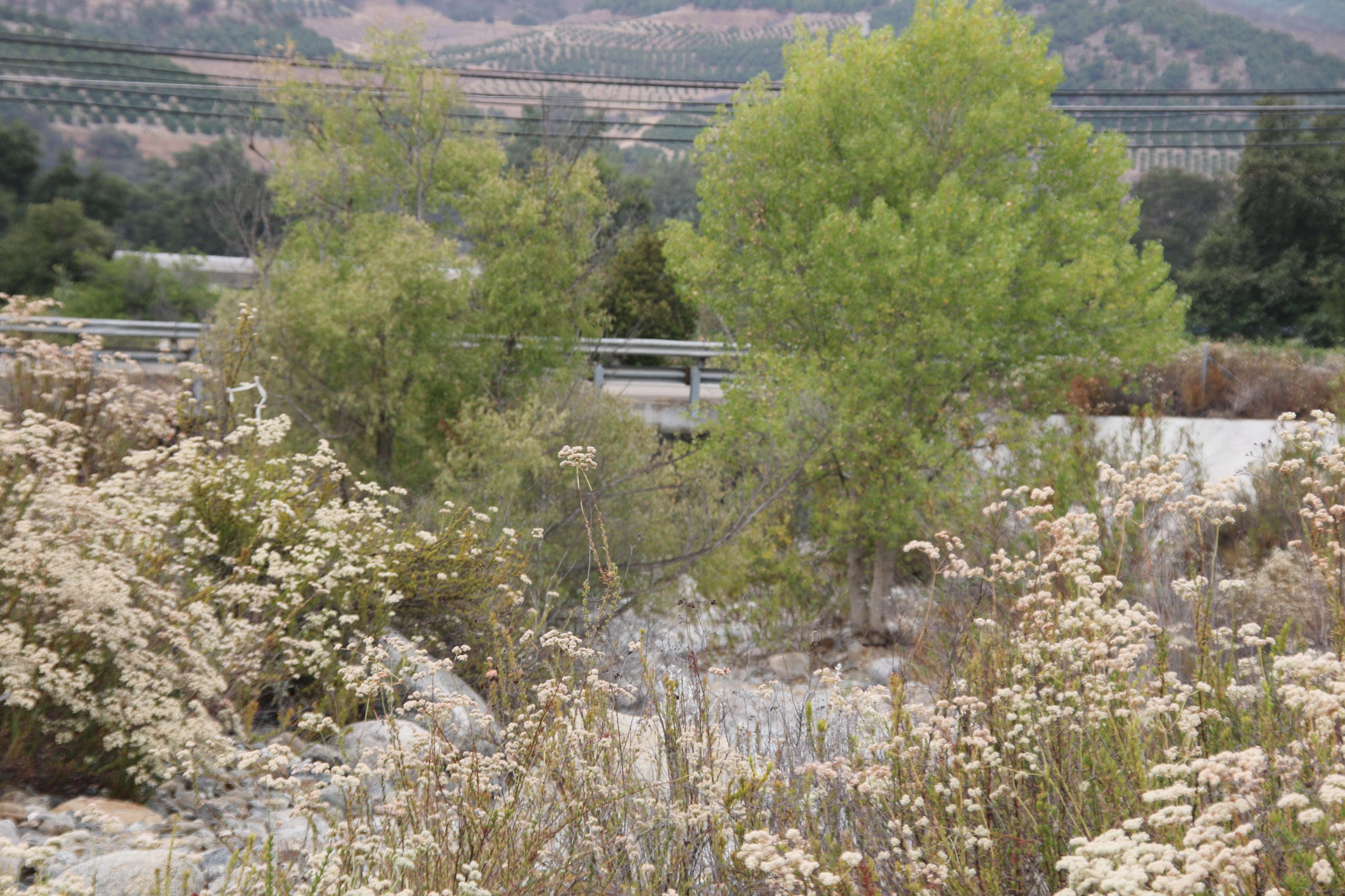 Pauma Creek Bridge