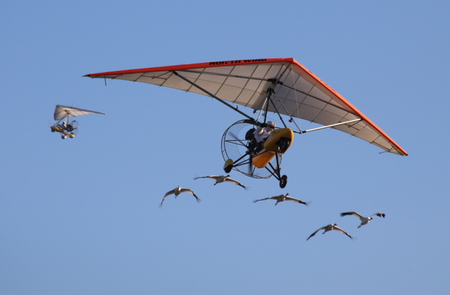 Whooping cranes ultralight