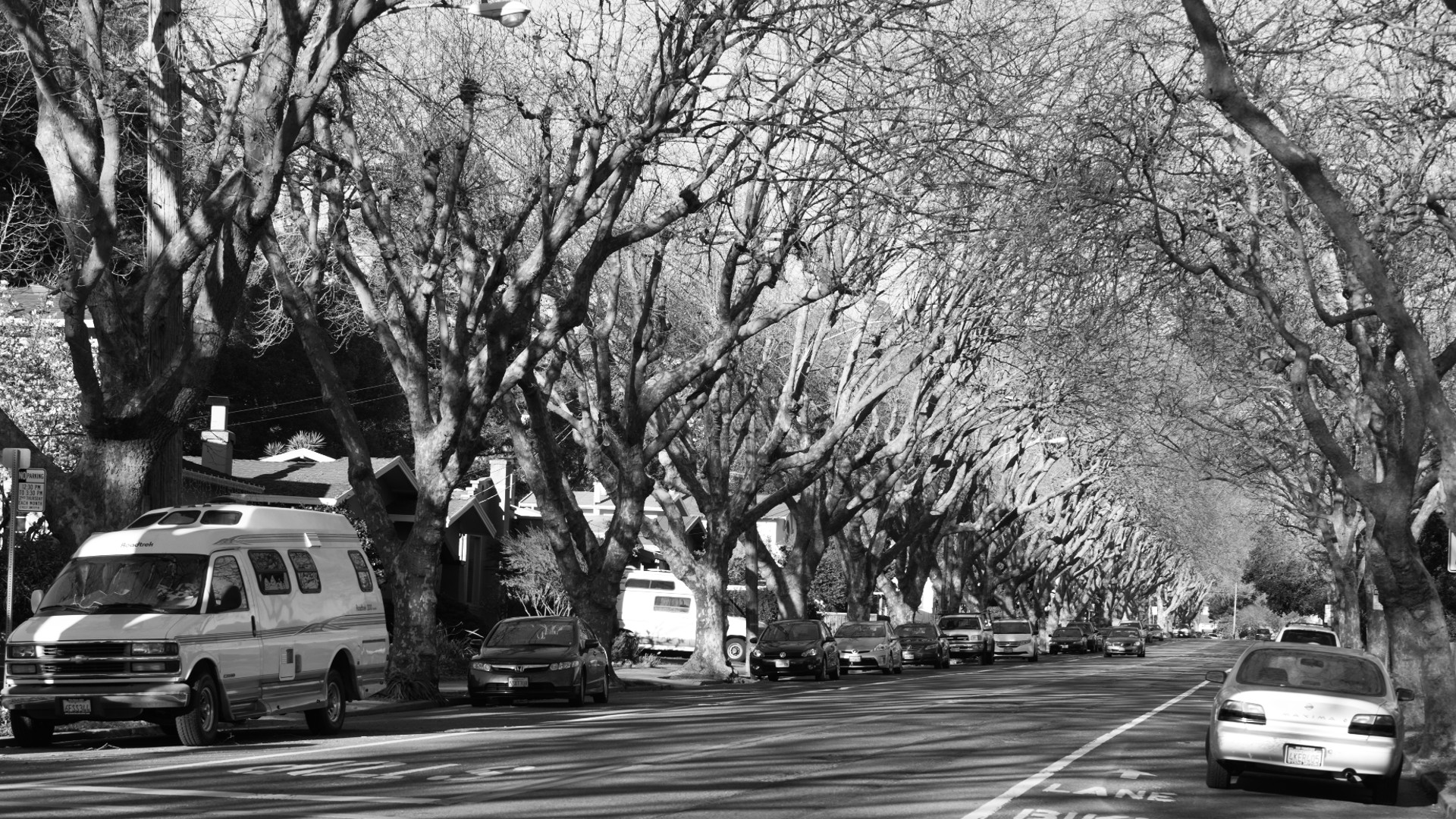 Berkeley trees