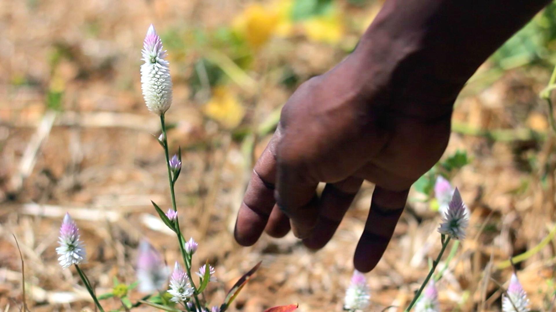 Soliga plant