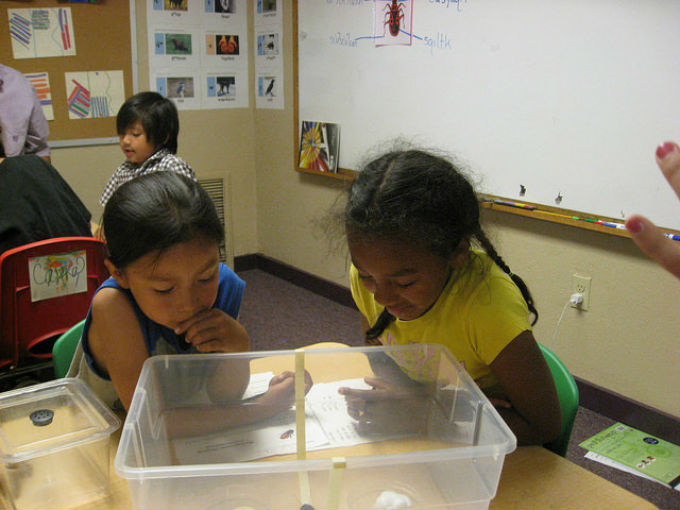 First graders observe insects.
