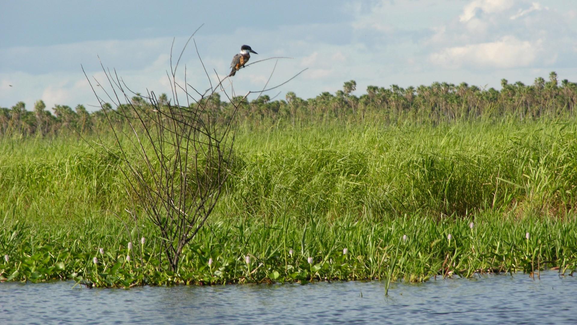 floating vegetation