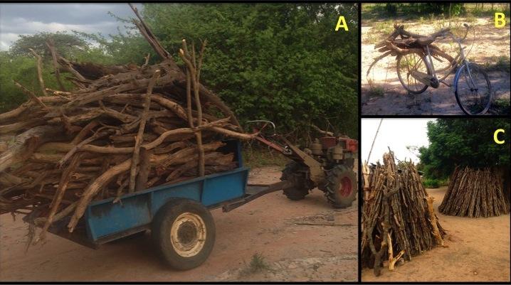 Tanzania firewood