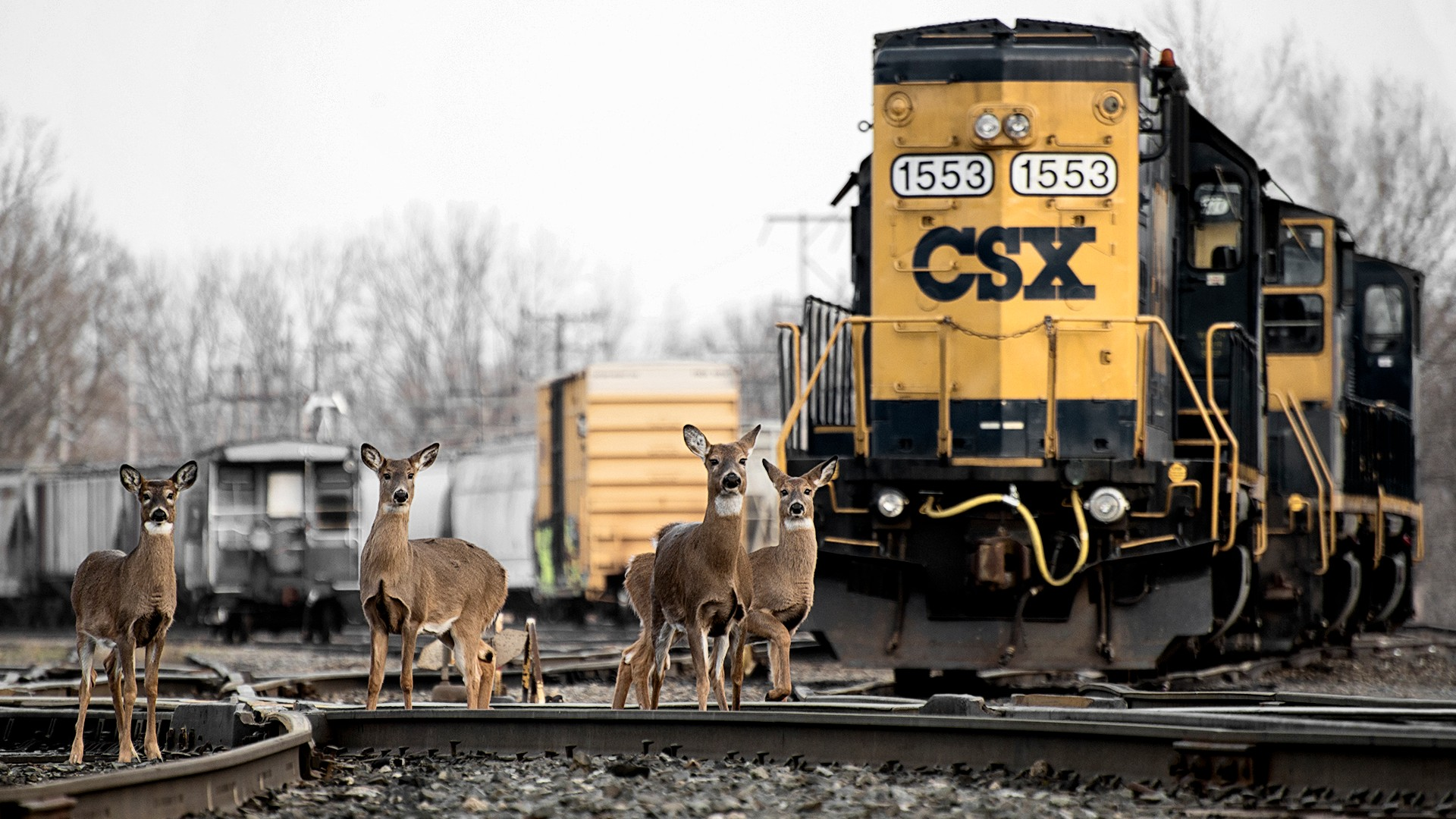 Deer on train tracks