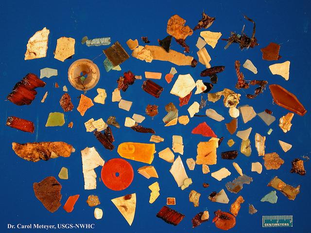 plastic-seabird-stomach-USGS.jpg