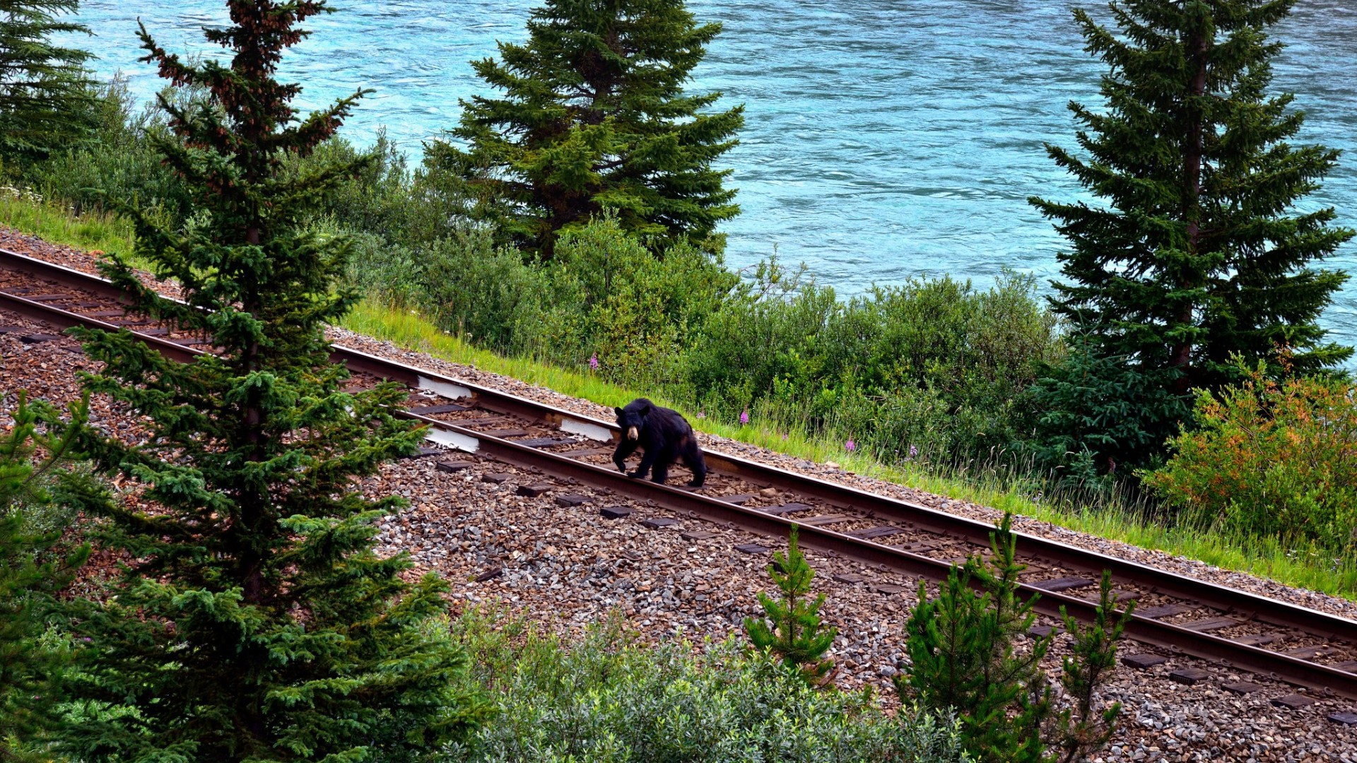 Bear on railway tracks