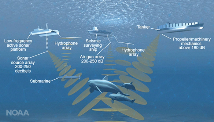 The Unseen Threat: Noise in the Arctic Marine Environment