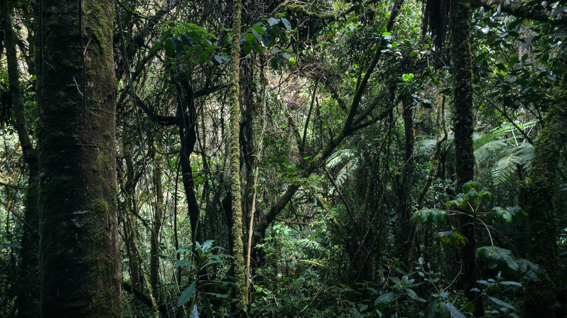 Colombia rainforest