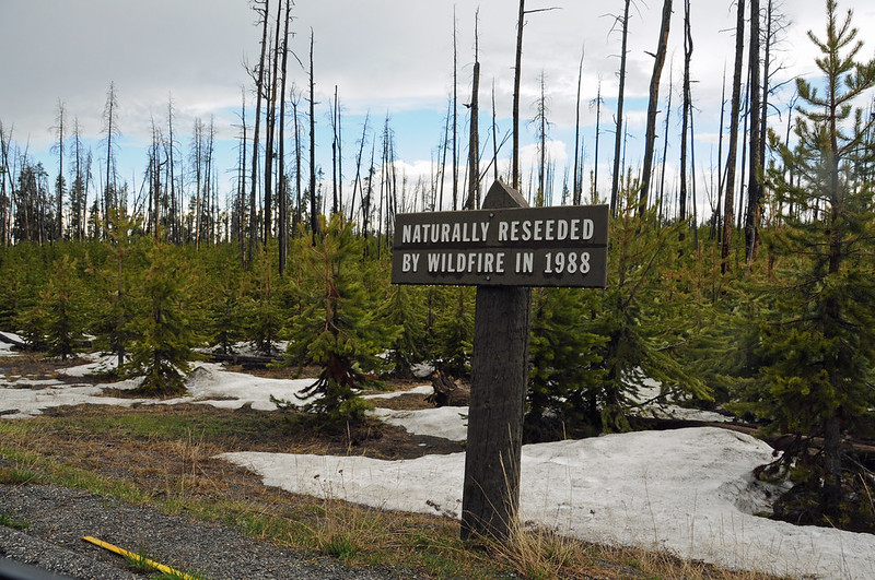 The Bad Seeds: Are Wildfire Recovery Efforts Hurting Biodiversity? • The Revelator