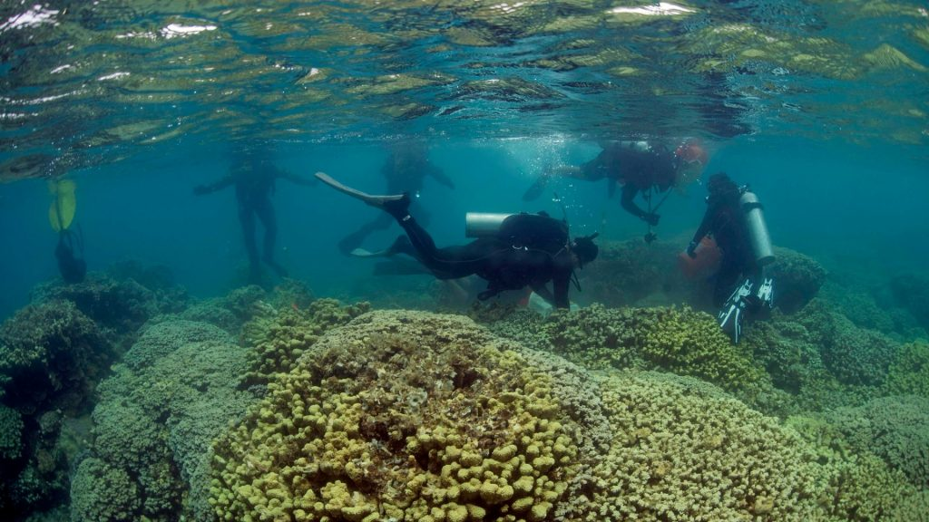 divers repair reef