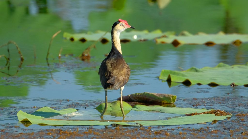 bird standing in wetland