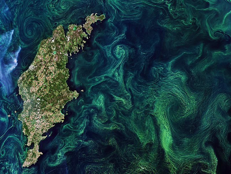 Aerial algal bloom