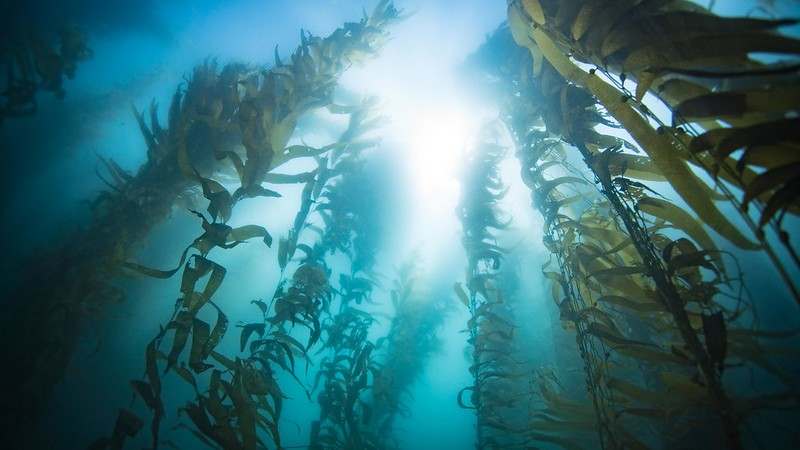 sunlight coming through water with kelp