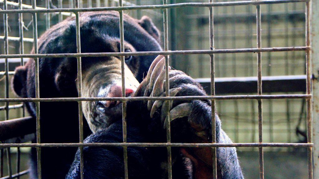 Sun bear cage