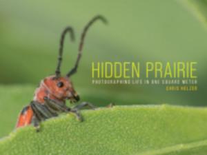 Hidden Prairie
