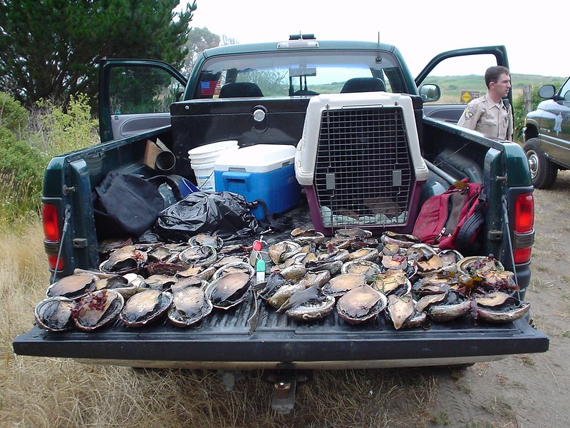 abalone in pickup truck