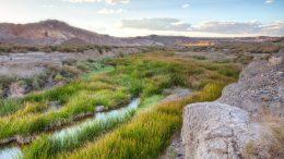 Riparian area in desert