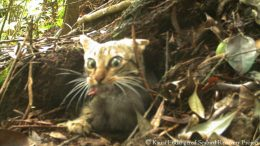 feral cat endangered bird
