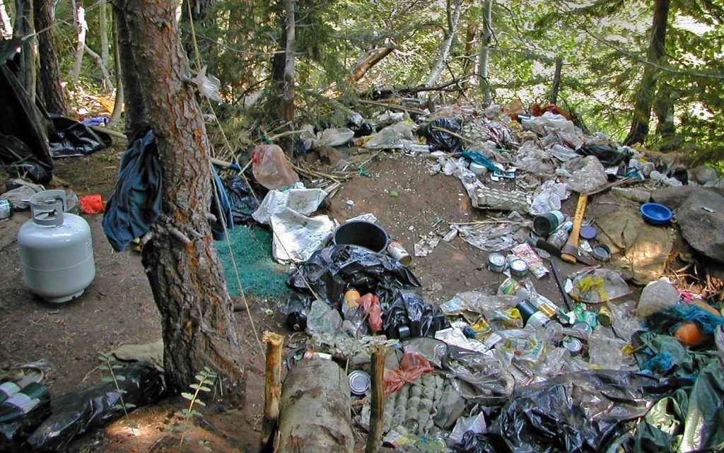garbage in forest