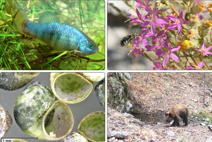 Four species using freshwater resources
