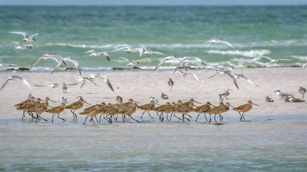 birds on beach and flying