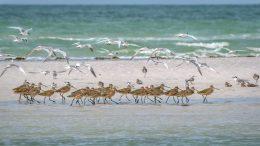 birds on beach and flying