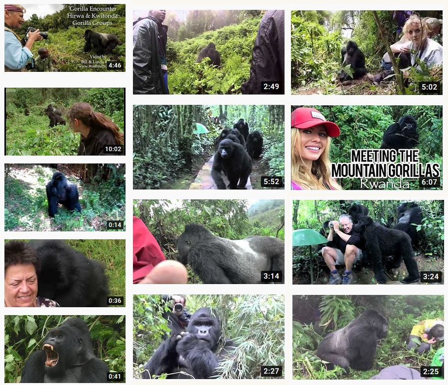gorillas YouTube