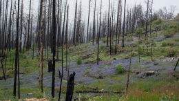 wildfires and other plants on forest floor