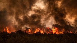 Pantanal Fire