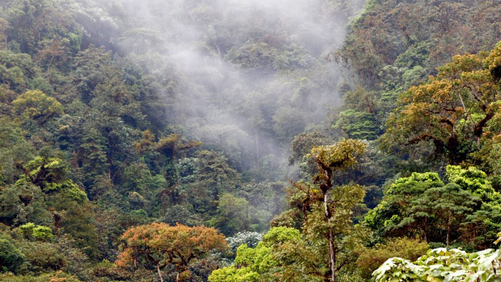 Los Cedros cloud forest