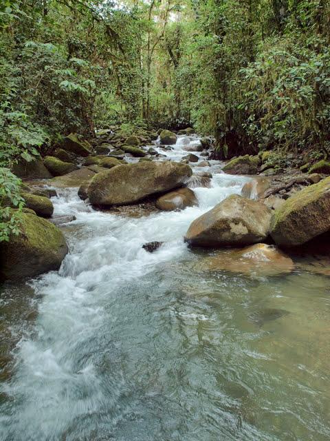 Rio Los Cedros