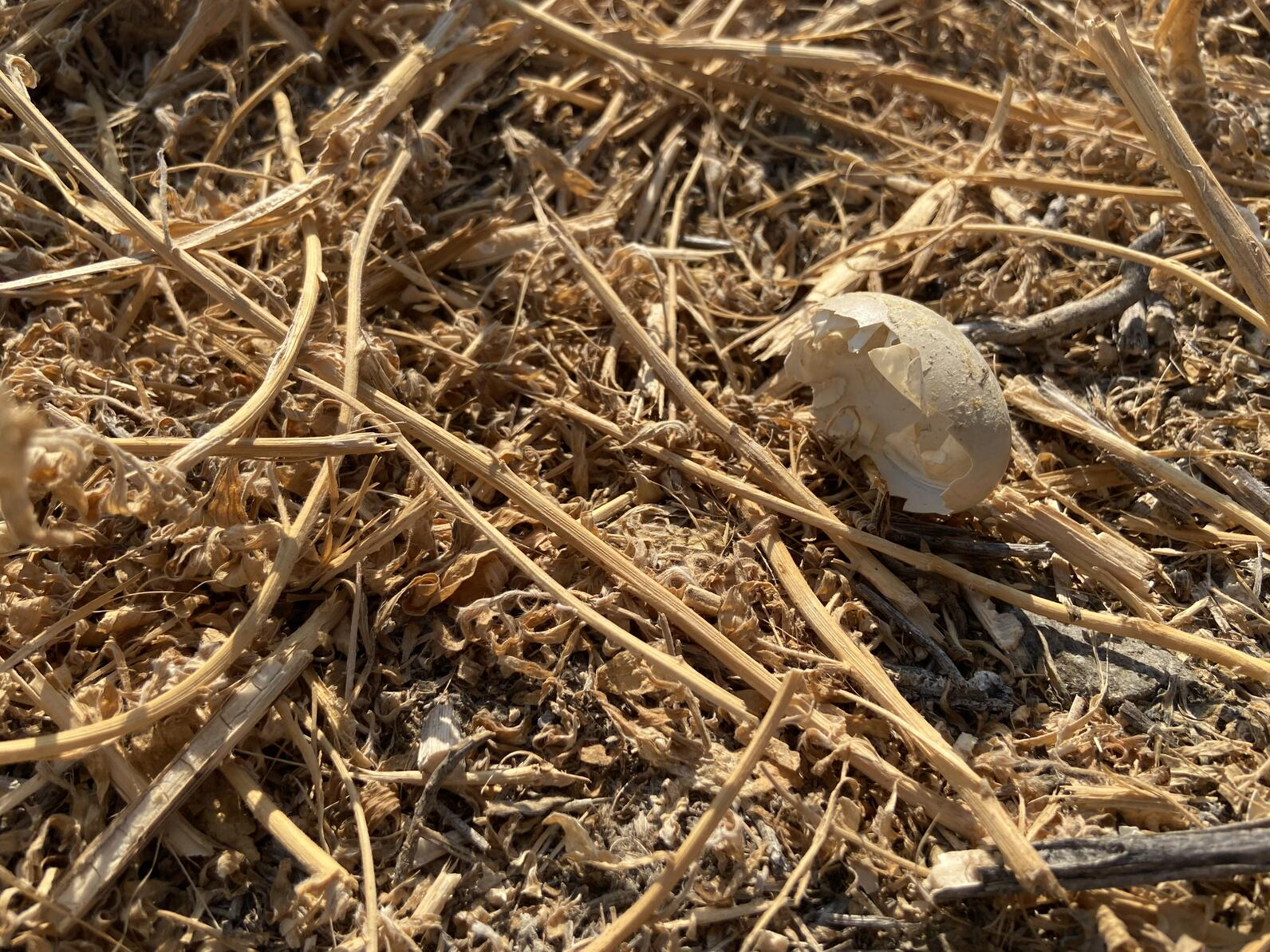 Egg shell on the ground