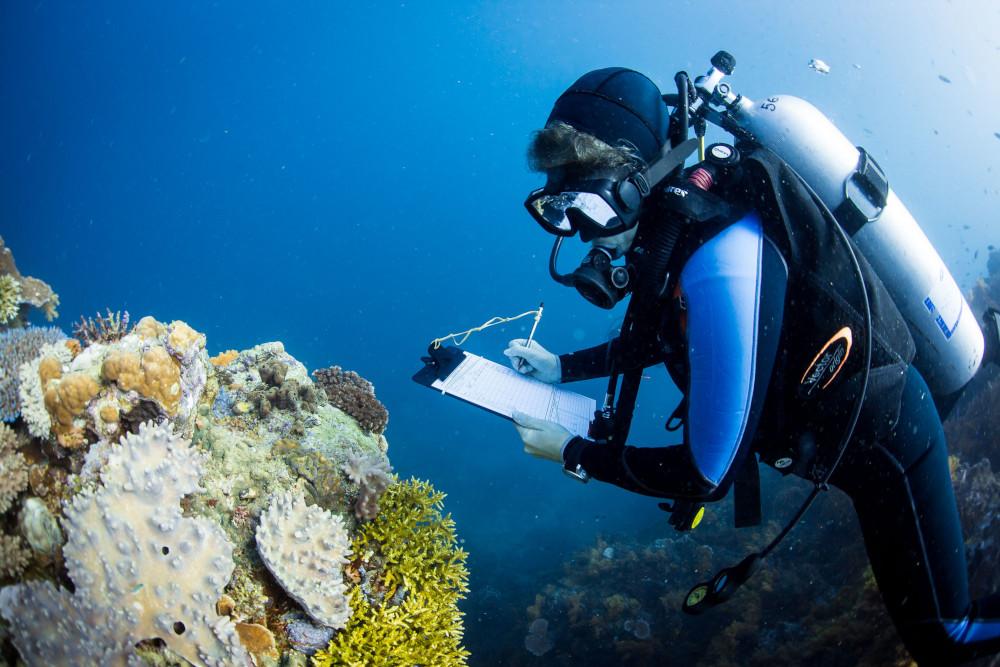 clipboard coral