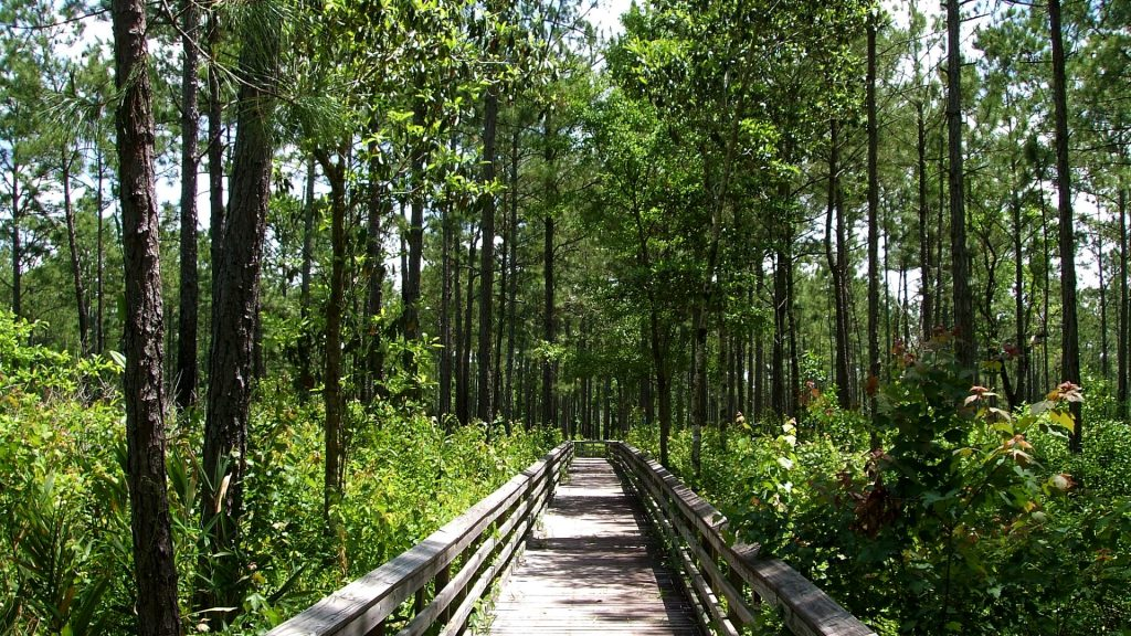 board walk through vegetation