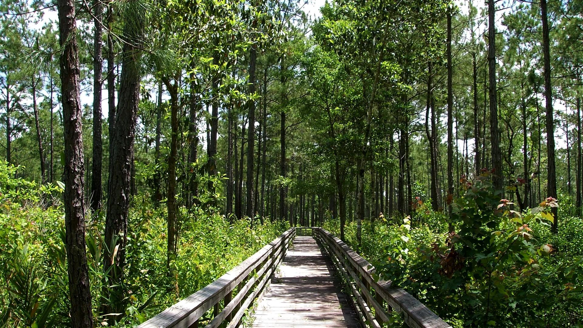 board walk through vegetation
