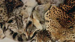 wildlife skins
