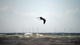 Gull flying with turbines in the background