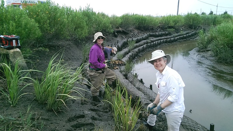 Workers developing living shoreline