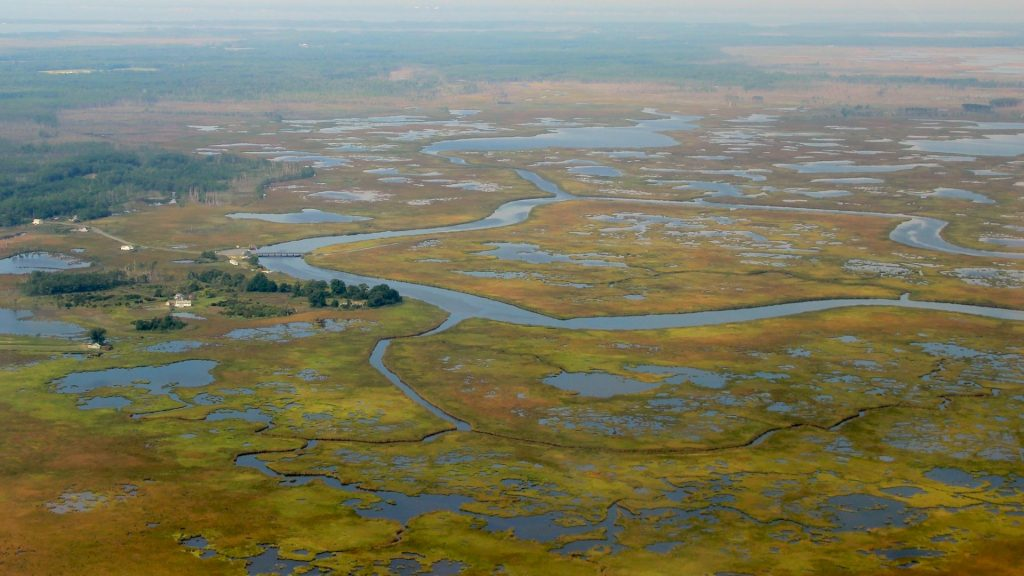 aerial view of wetlands